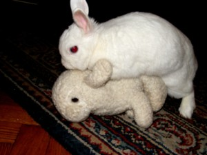 mate_like_rabbits_when_trying_to_have_a_baby